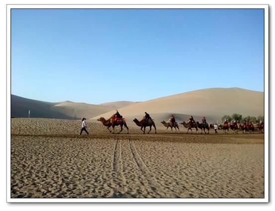 在沙漠里,似乎感覺駱駝很乖,靜靜地聽從領駝人指揮,步調一致.圖片